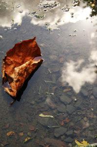 """Balade photo sénior : série photo """"A nos pieds"""""""