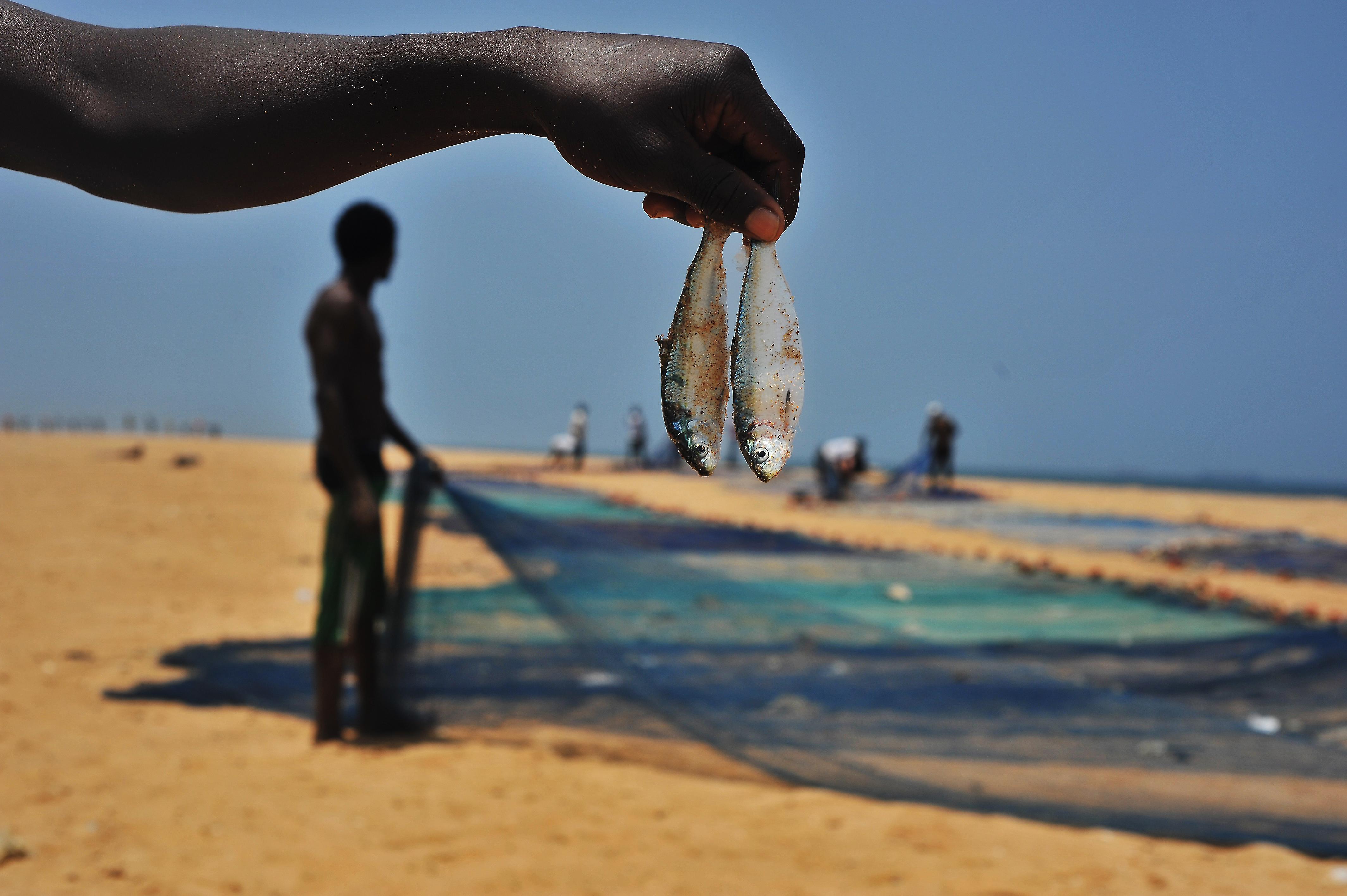 6Pêche miraculeuse sur la grande plage de Lomé
